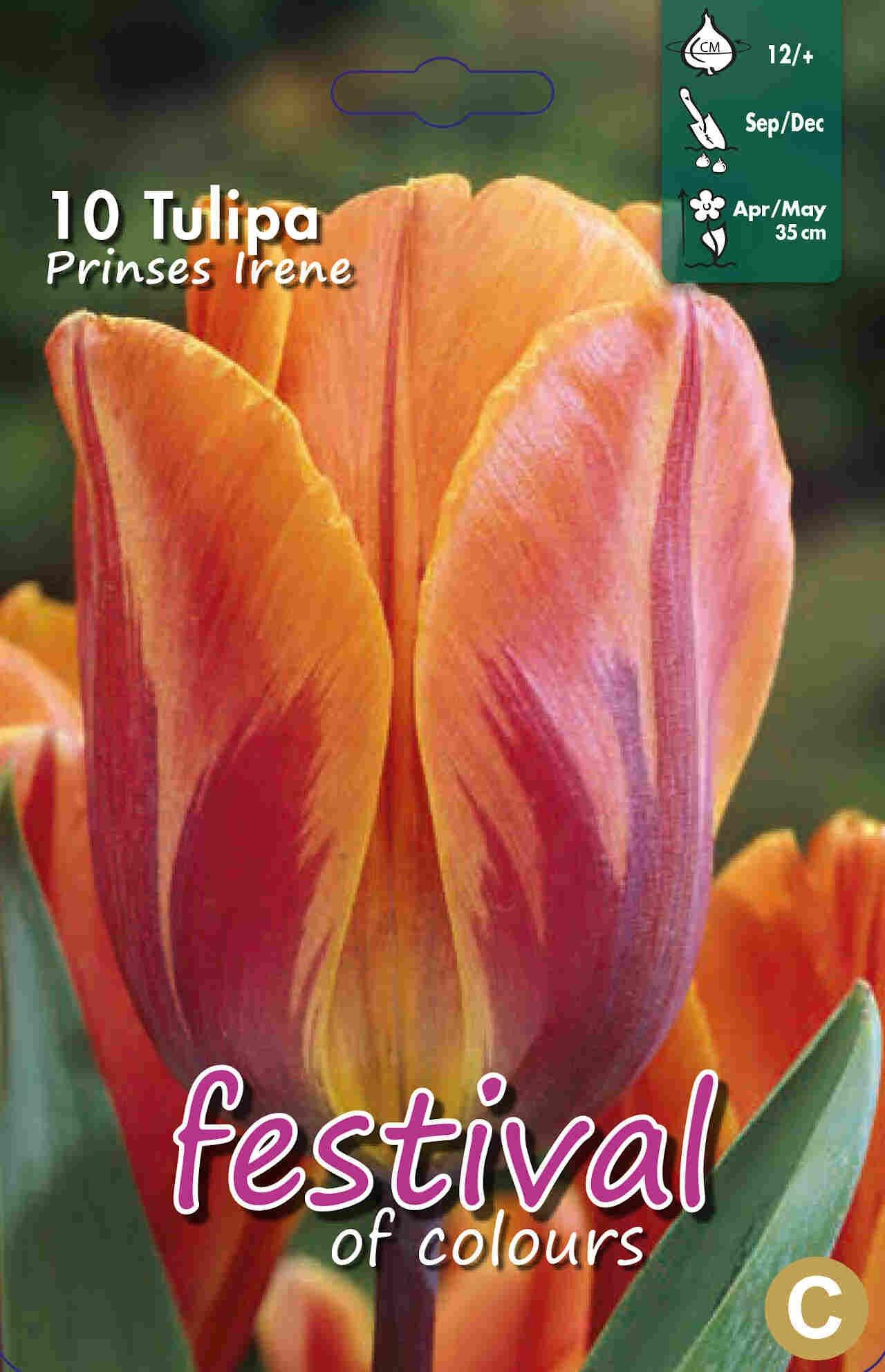 Tulipanløg - Tulipa Prinses Irene 12/+