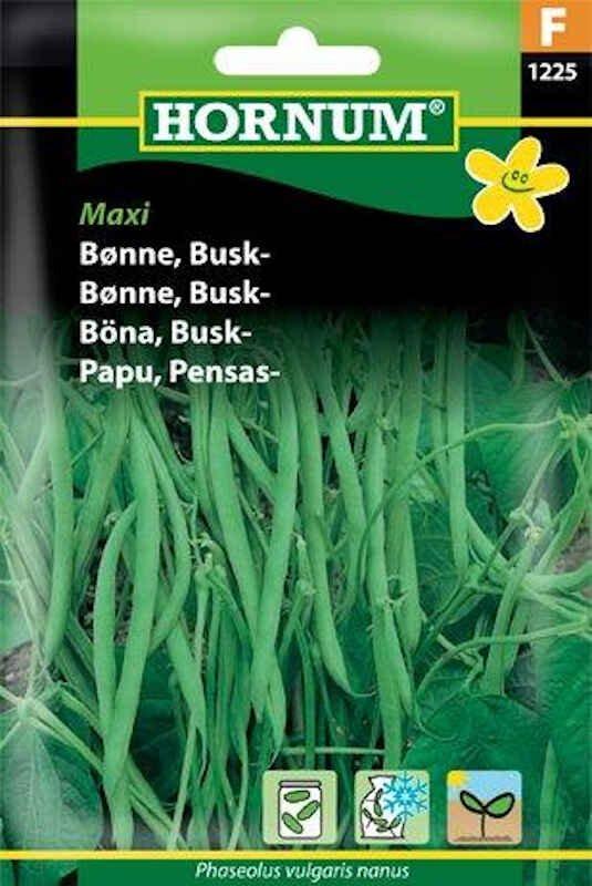 Bønnefrø - Buskbønne - Maxi