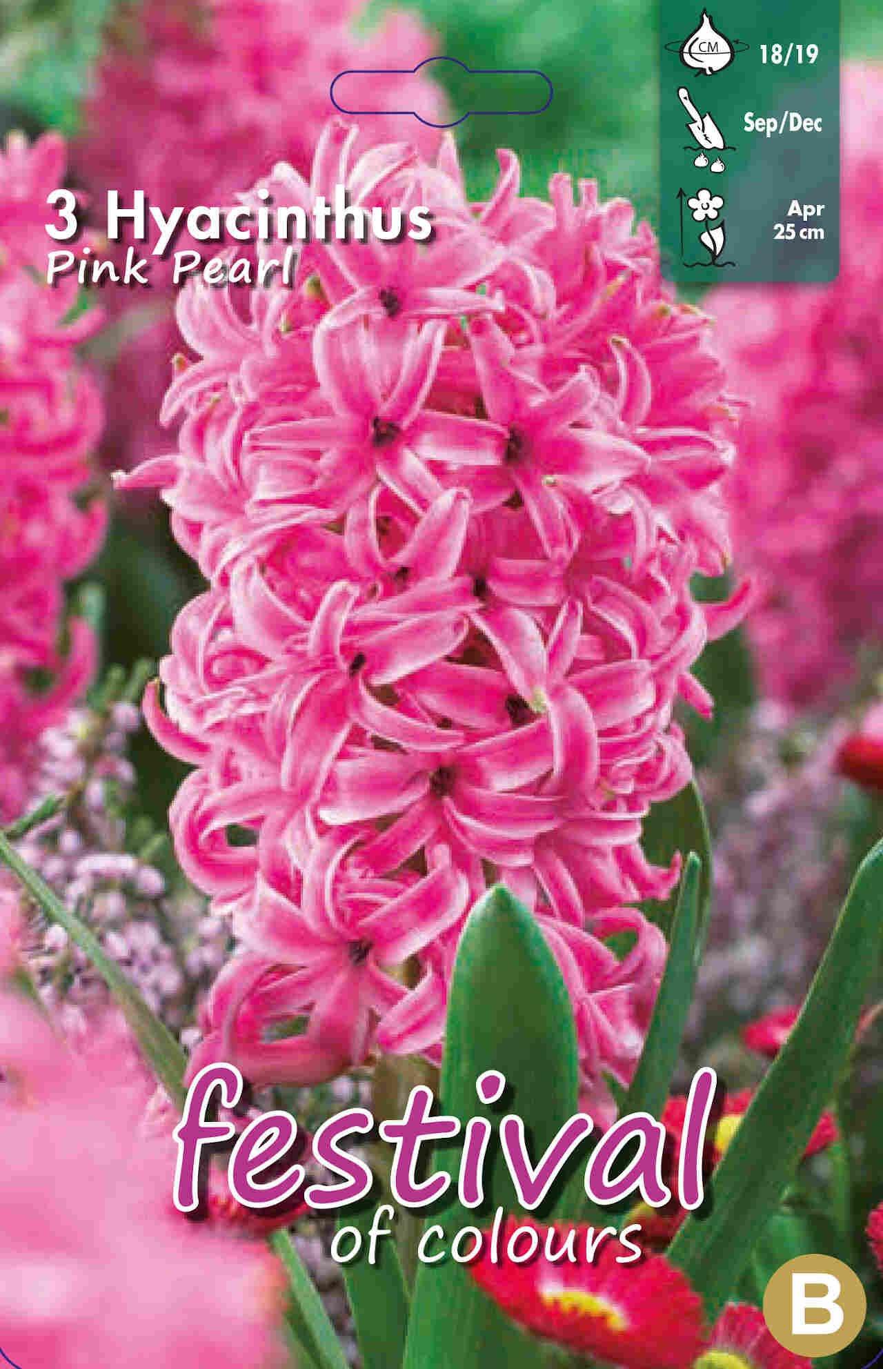 Hyacinths Pink Pearl 18/19