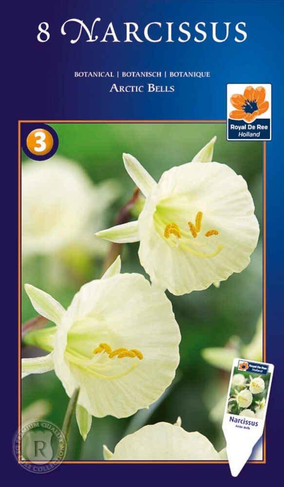 Påskeliljeløg - Narcissus Arctic Bells 8/10