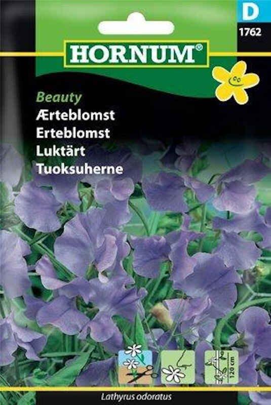 Ærteblomstfrø - Beauty