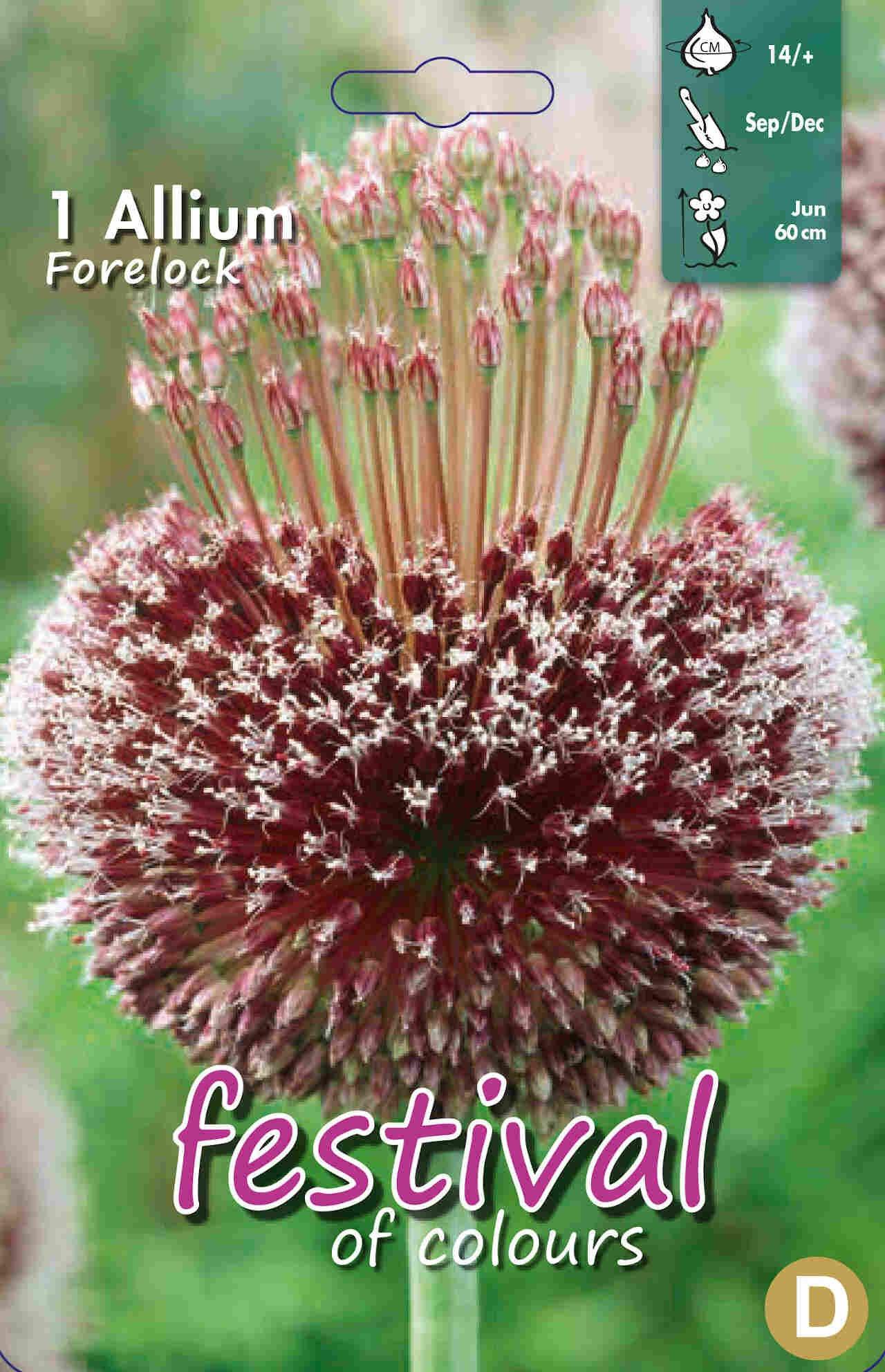 Prydløg - Allium Forelock 14/+