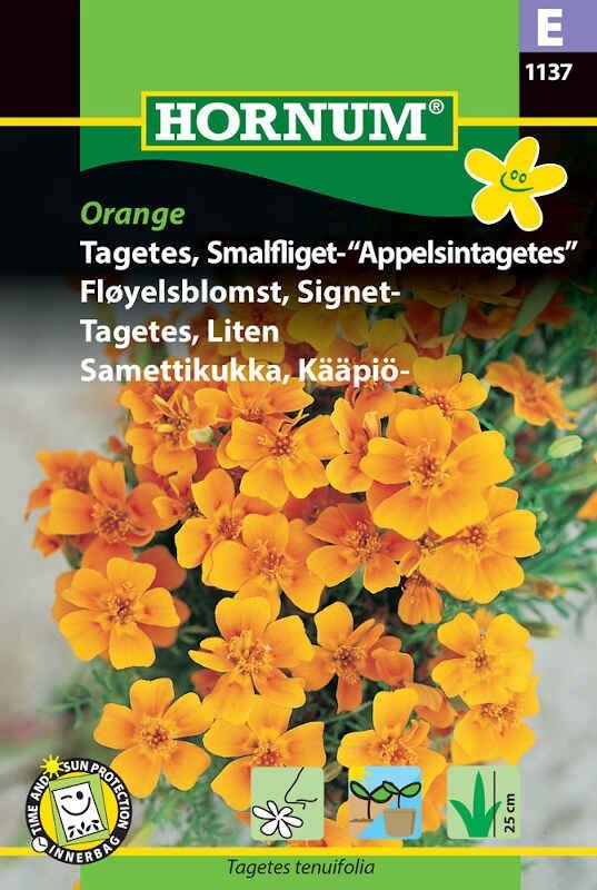 Tagetes frø - Smalfliget - Appelsintag.
