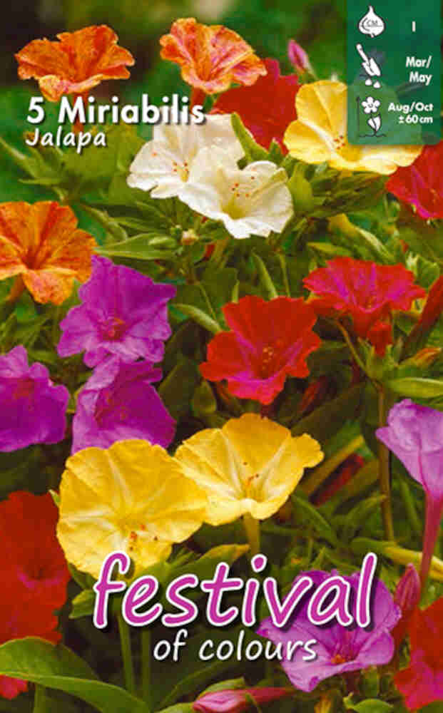 Vidunderblomst - Mirabilis Jalapa