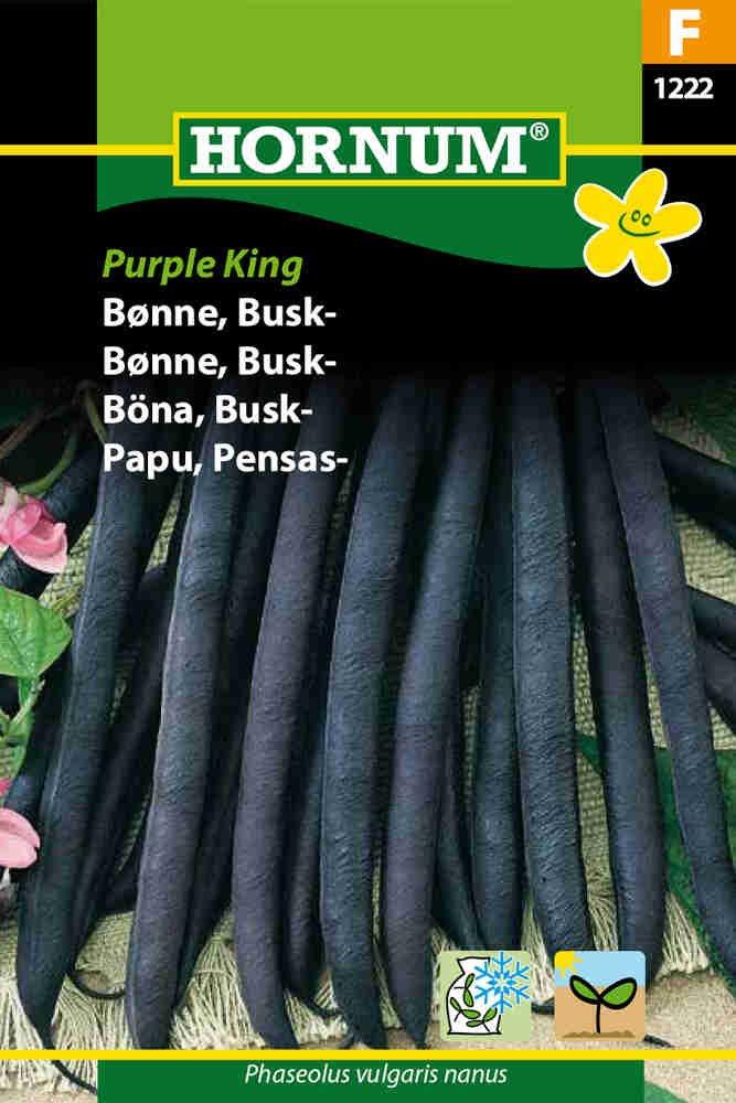 Buskbønne - Purple King