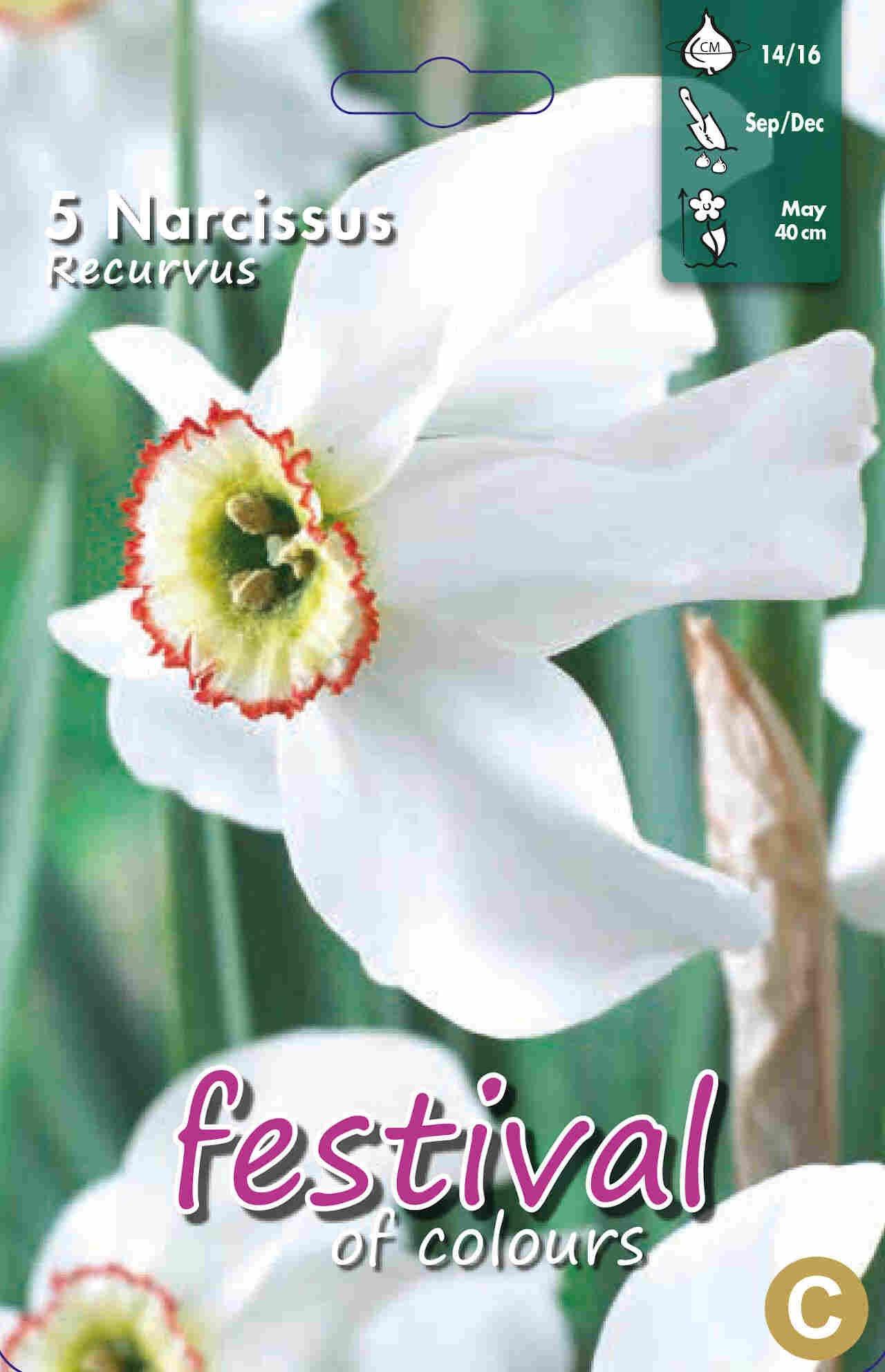 Påskeliljeløg - Narcissus Recurvus 14/16