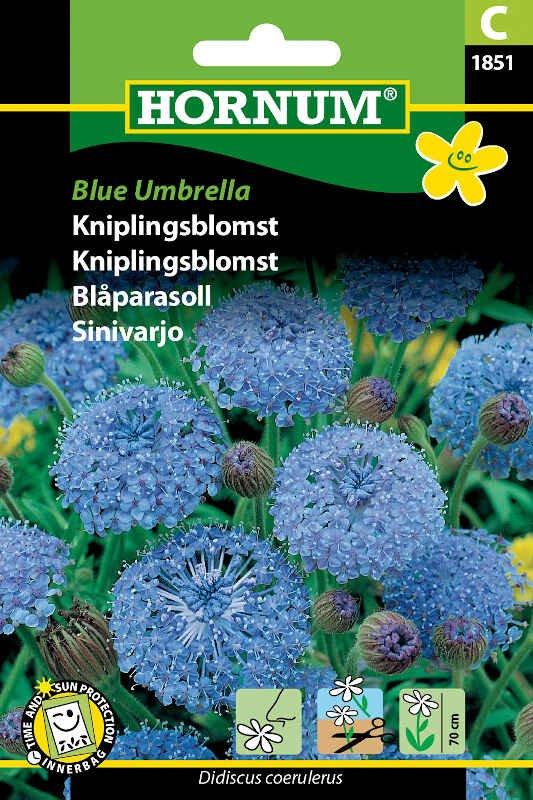 Kniplingsblomst frø - Blue Umbrella