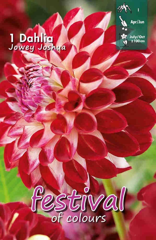 Dahlia Jowey Joshua Ball