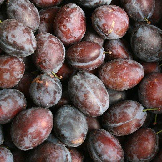 Blommetræ - Prunus domestica 'Valor'