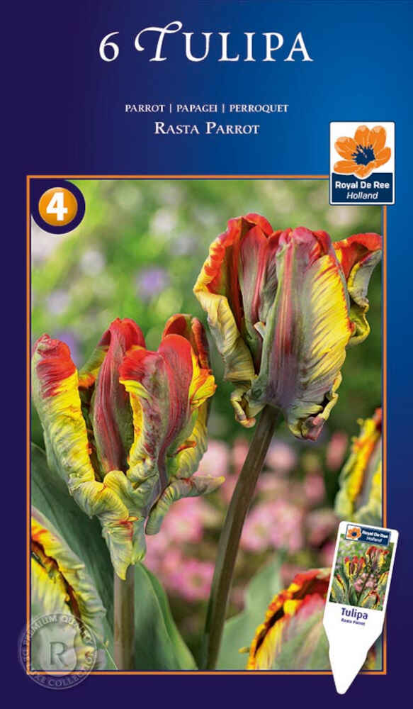 Tulipanløg - Tulipa Rasta Parrot 12/+
