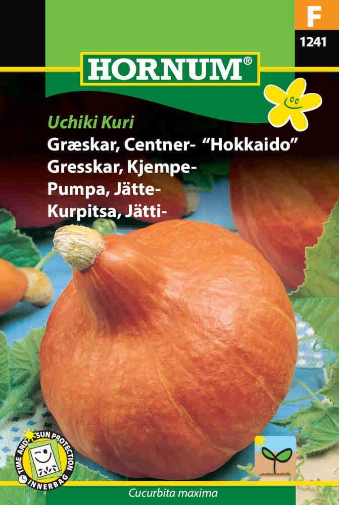 Græskarfrø - Centner - Uchiki Kuri