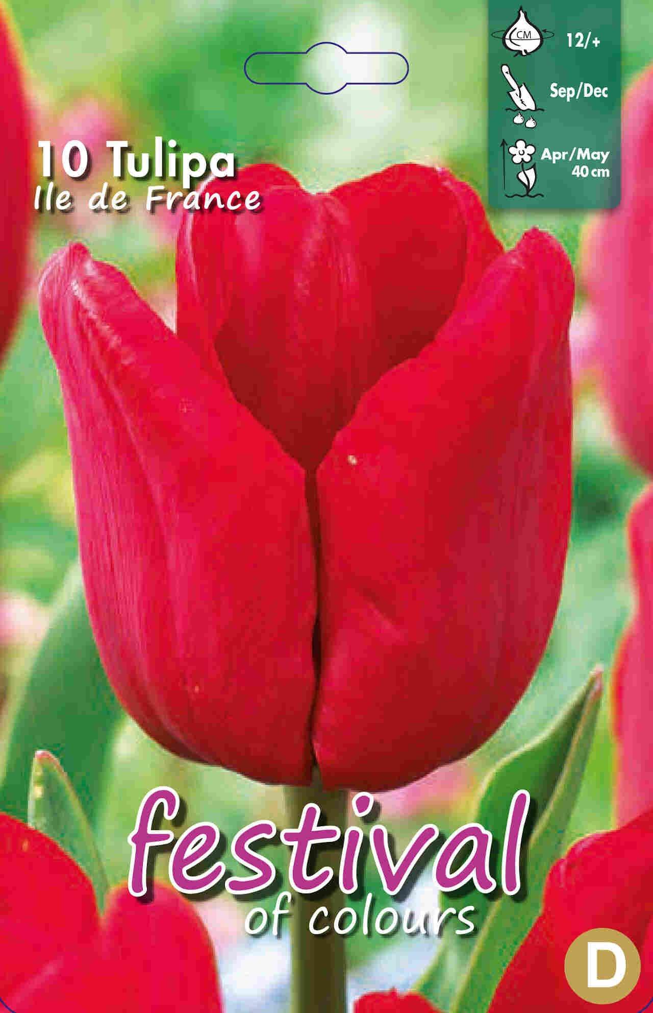 Tulipanløg - Tulipa Ile de France 12/+