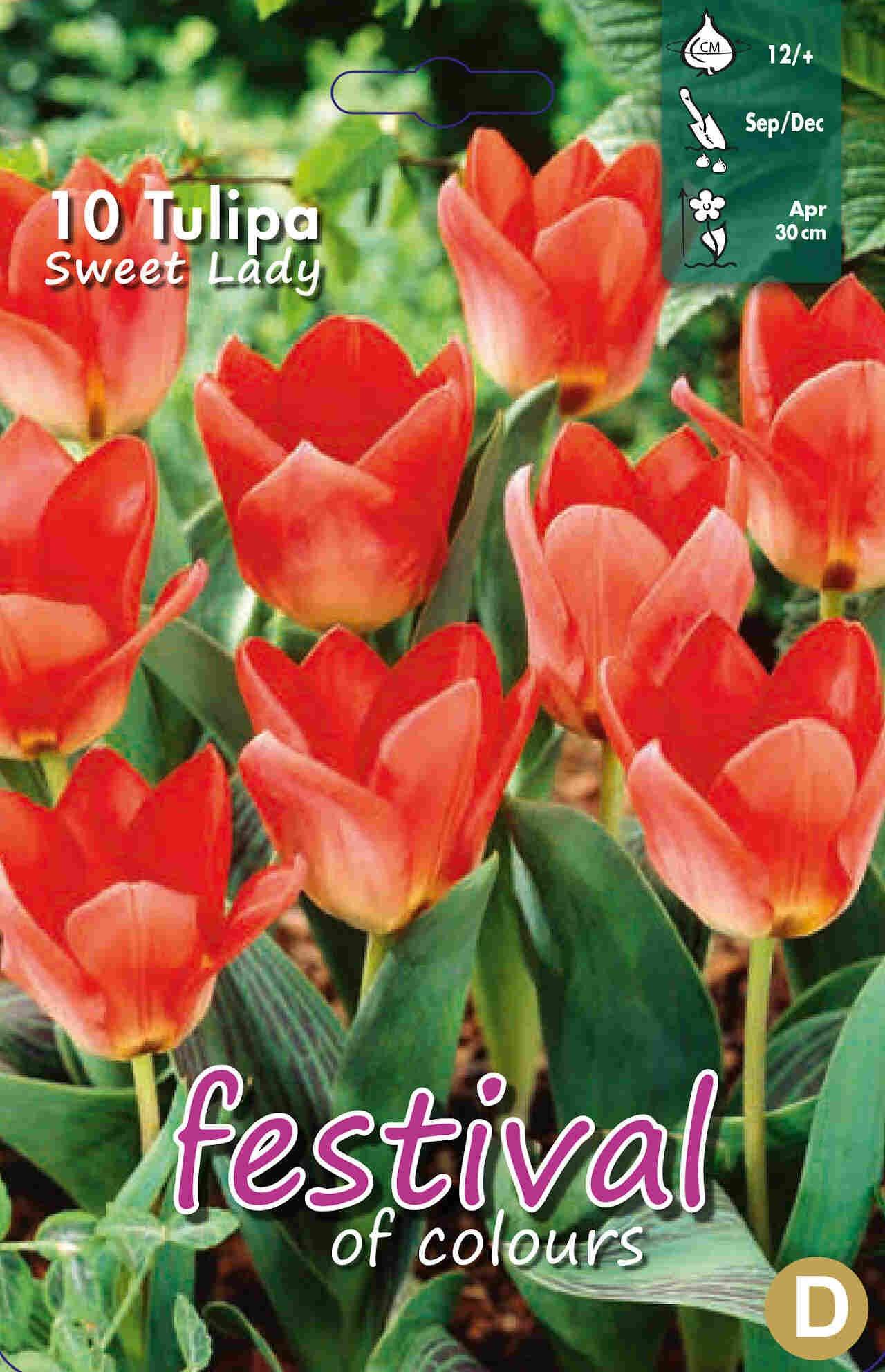 Tulipanløg - Tulipa Sweet Lady 12/+