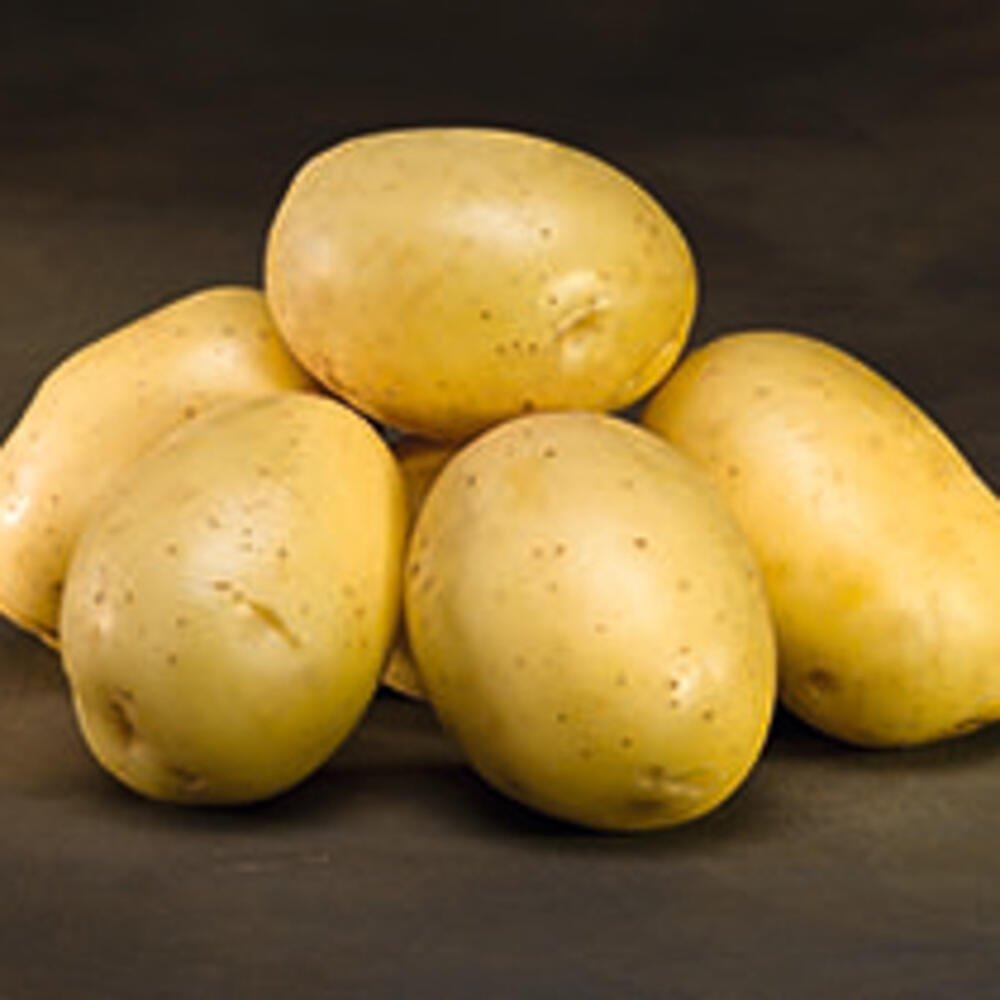 Læggekartofler - Borwina