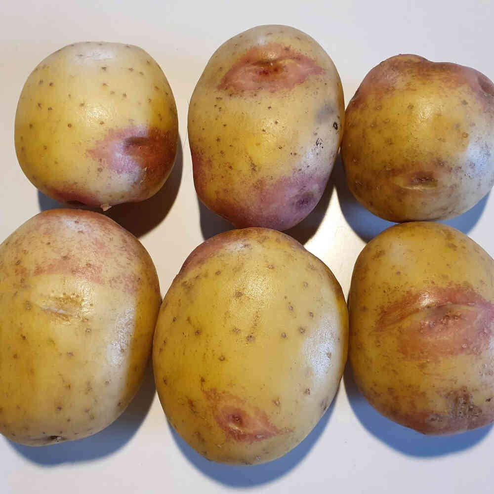 King Edward læggekartofler med røde øjne