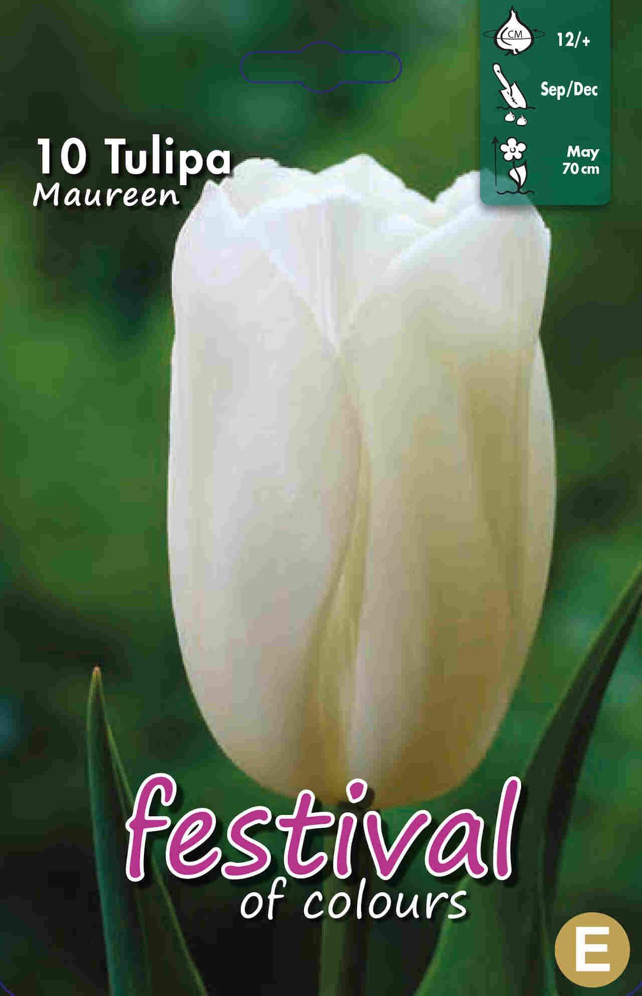 Tulipanløg - Tulipa Maureen 12/+