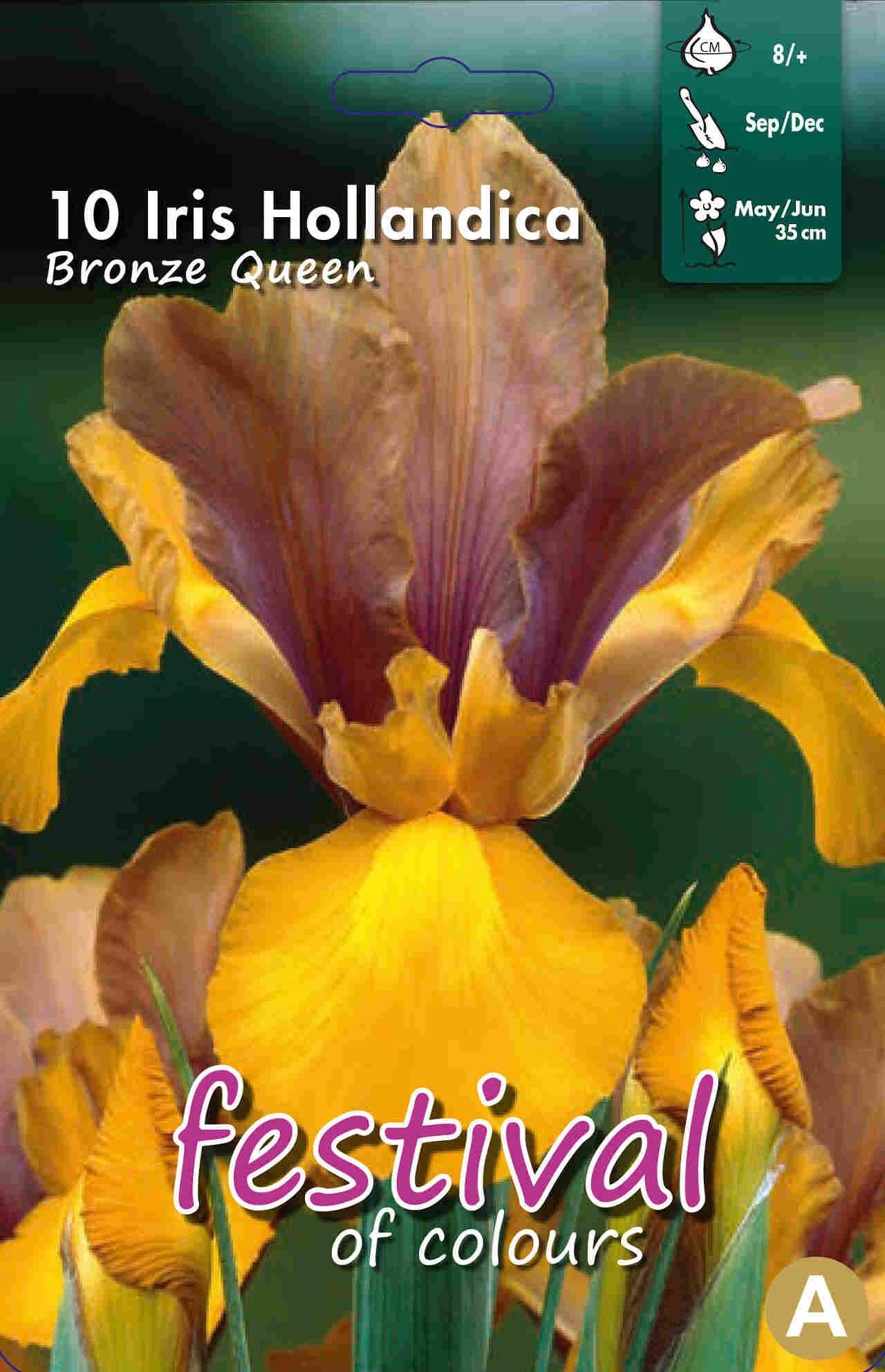 Iris Bronze Queen 8/+