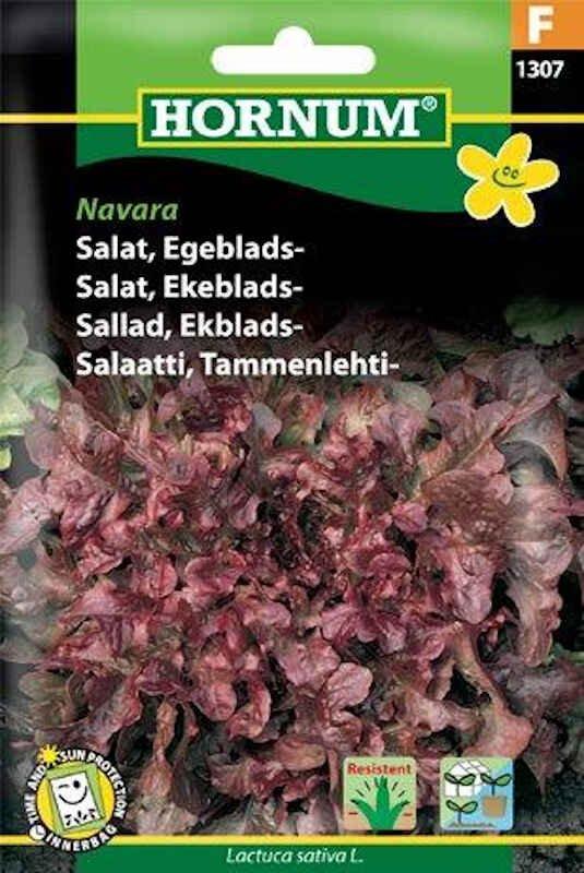 Salatfrø - Egeblads - Navara