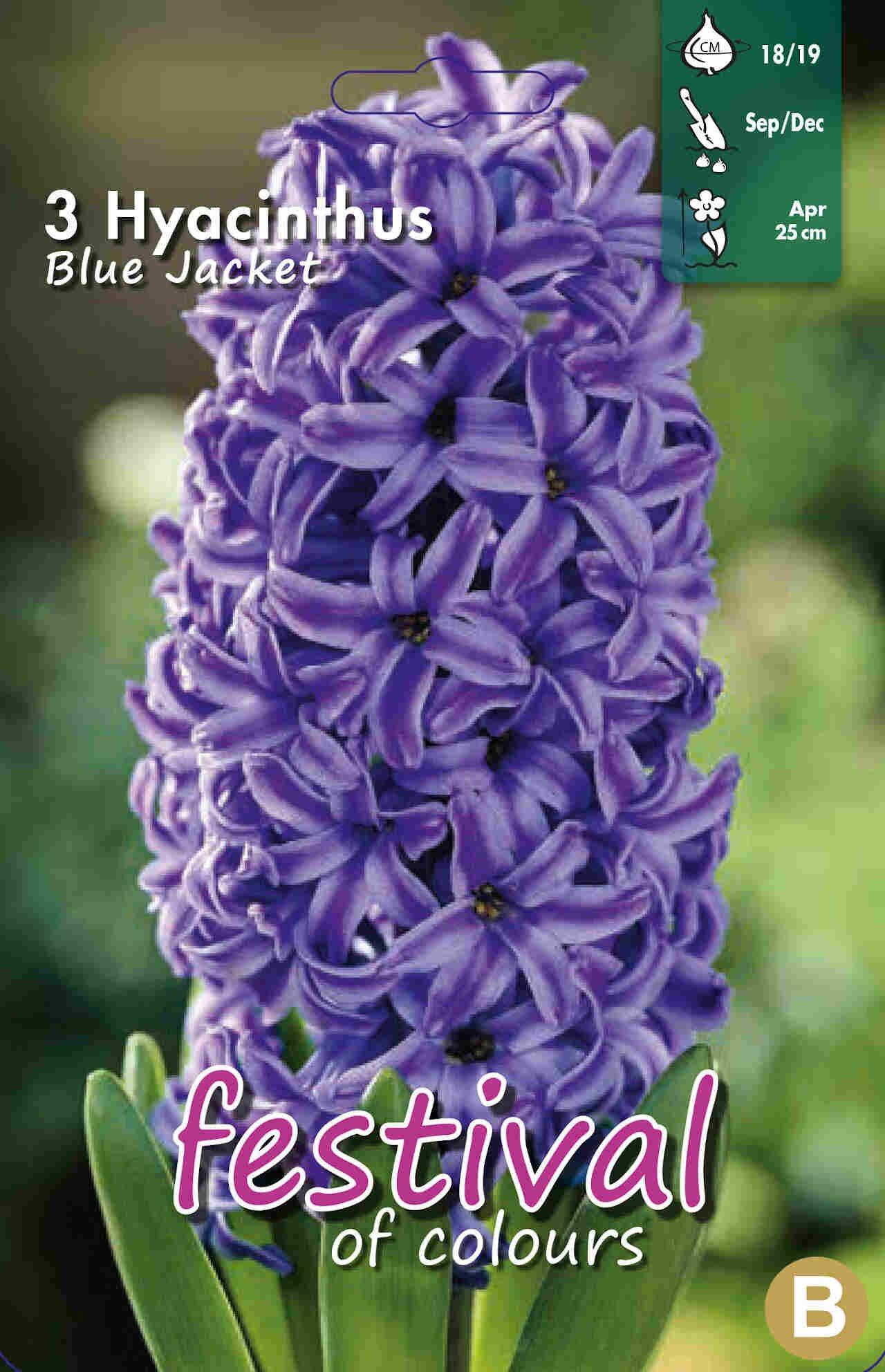 Hyacint - Hyacinthus Blue Jacket 18/19