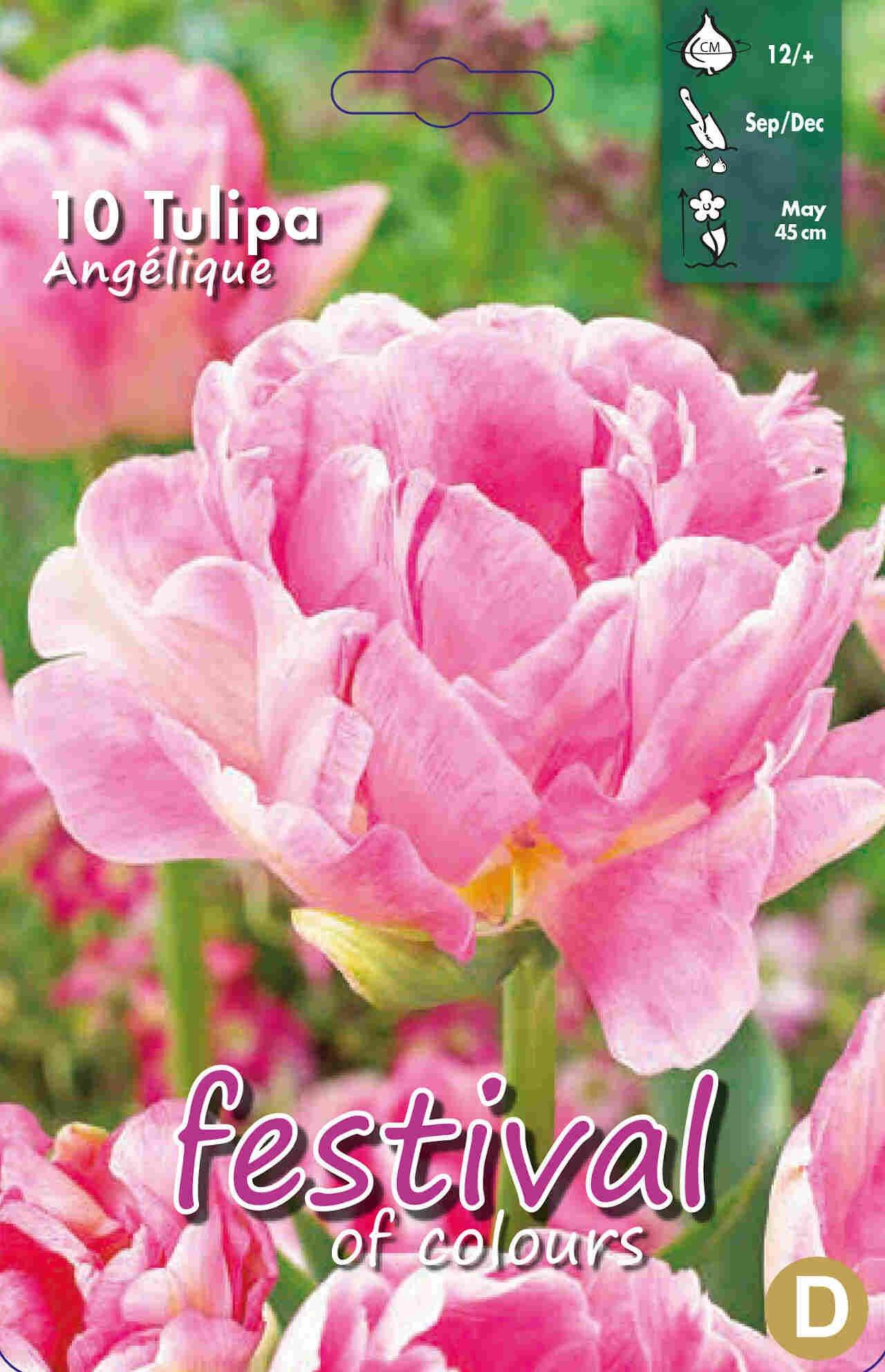 Tulipanløg - Tulipa Angelique 12/+