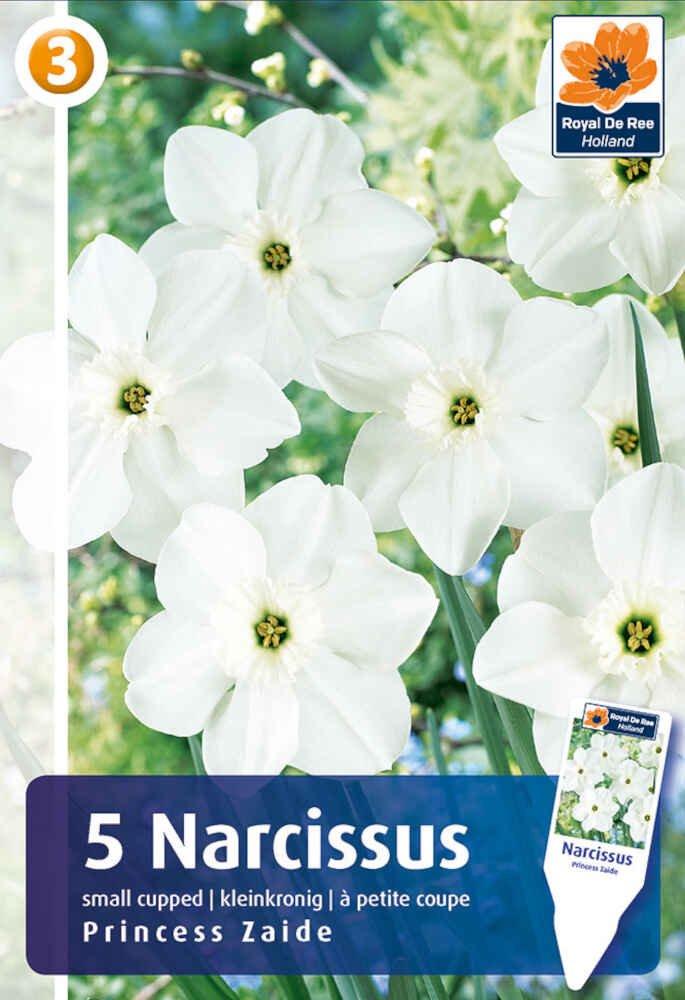 Påskelilje - Narcissus Princess Zaide 12/14