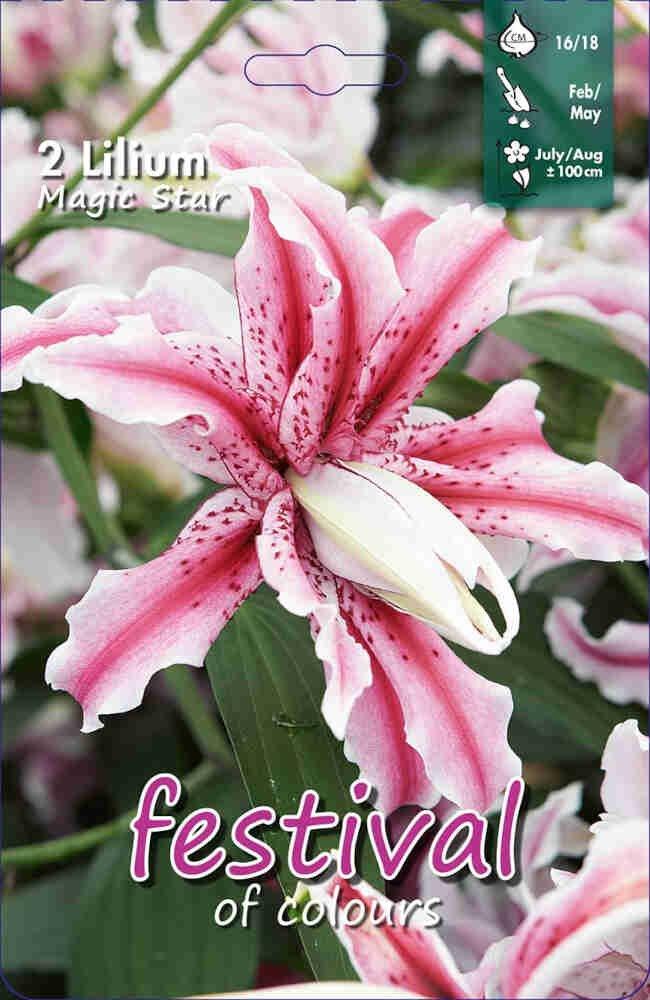 Orientalsk - Lilium Magic Star (x1) 16/18