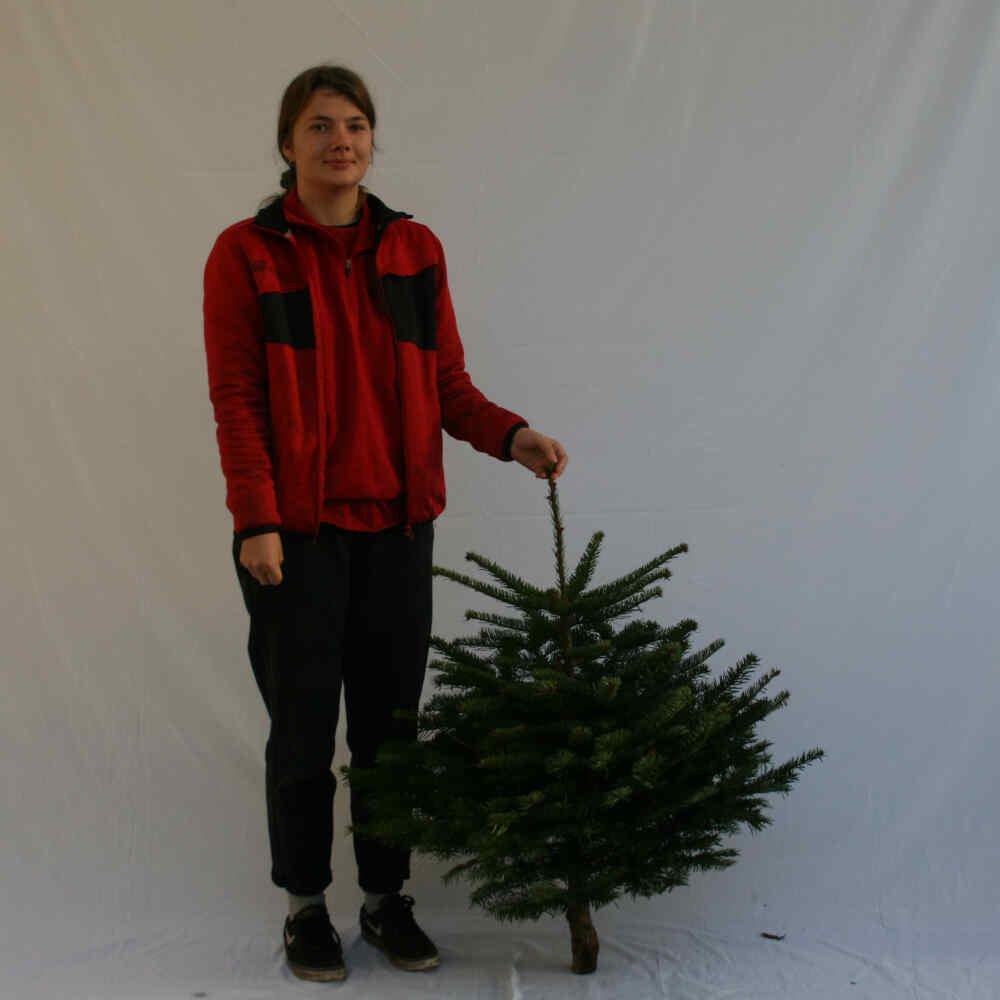 Juletræ - Nordmannsgran - 075-100cm