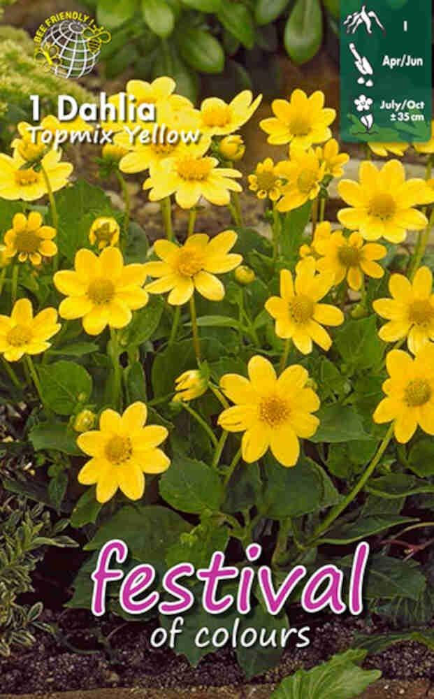 Dahlia Yellow Topmix