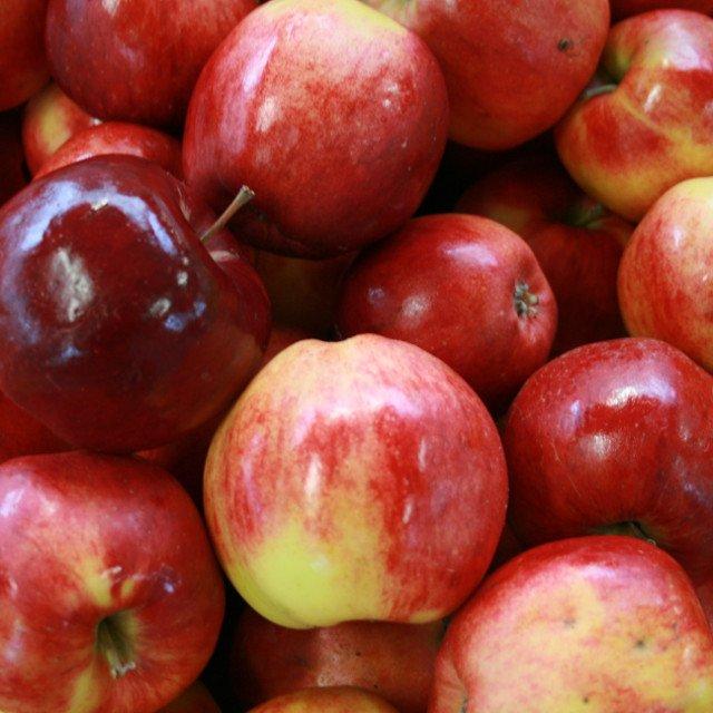 Æbletræ - Malus domestica 'Santana' - Dværg