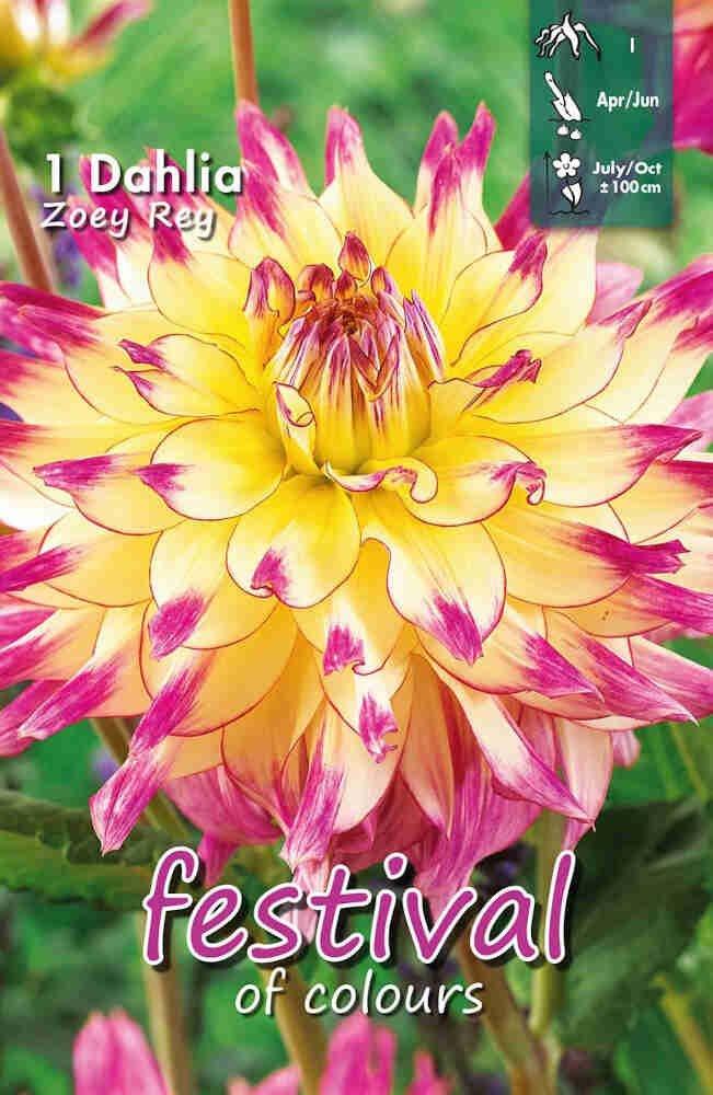 Dahlia Zoey Rey Decorative