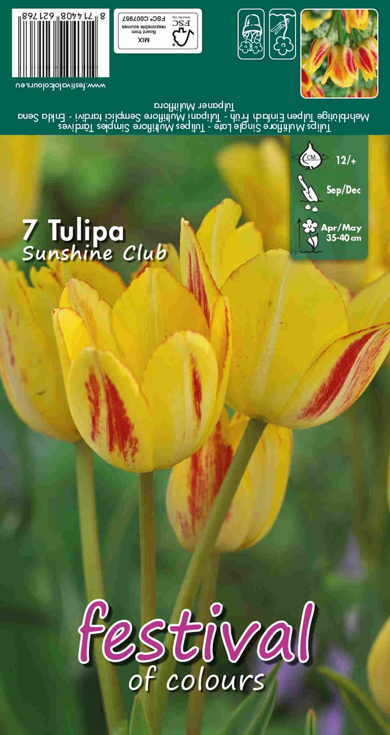 Tulipanløg - Tulipa Sunshine Club 12/+