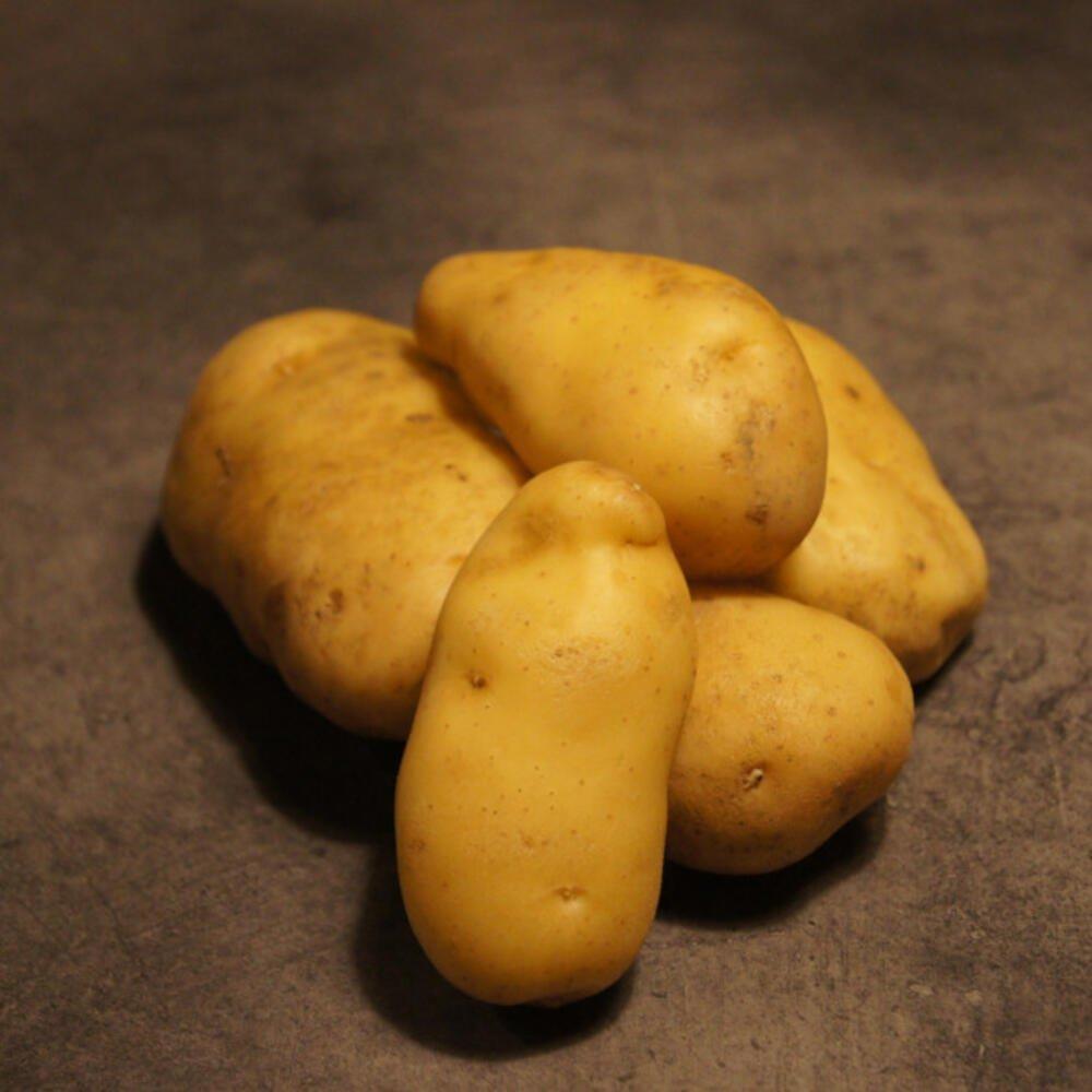 Linzer delikatesse tidlig asparges læggekartoffel