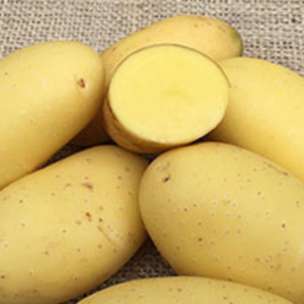 Læggekartofler - Santera