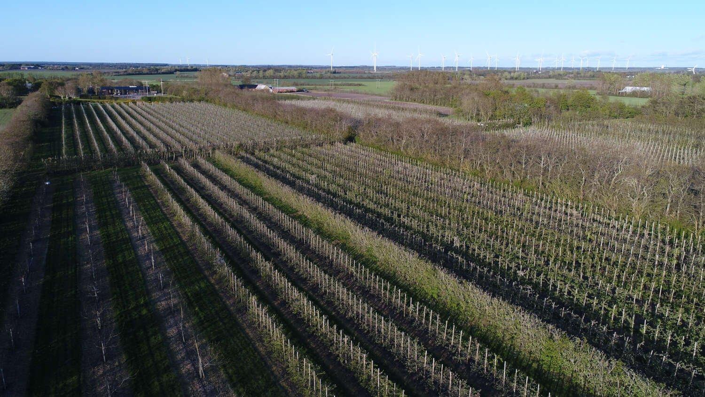 Luft foto af frugtplantage ved Vesterhavsmost