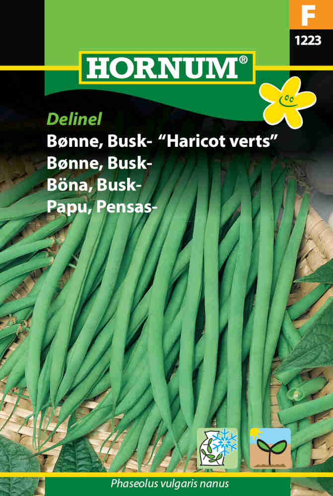 Buskbønne - Delinel/Harricot Verts