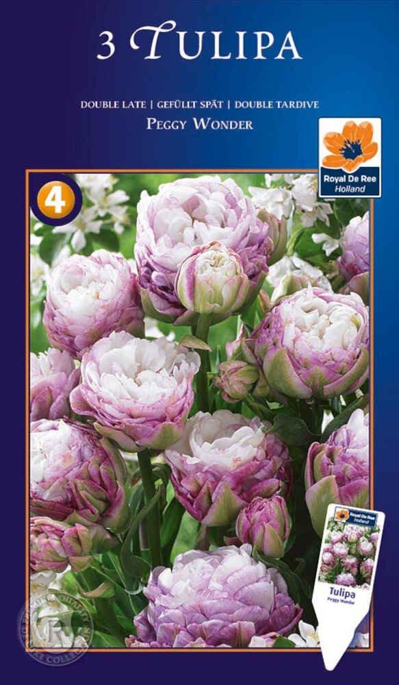 Tulipanløg - Tulipa Peggy Wonder 11/+