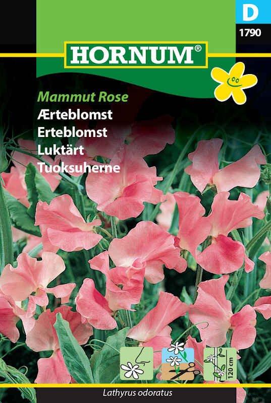 Ærteblomstfrø - Mammut Rose