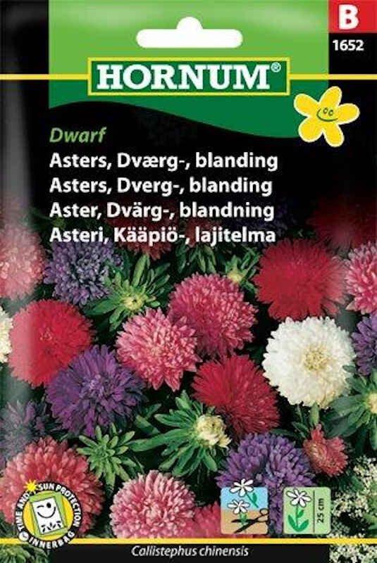 Asters frø - Dværg - blanding - Dwarf