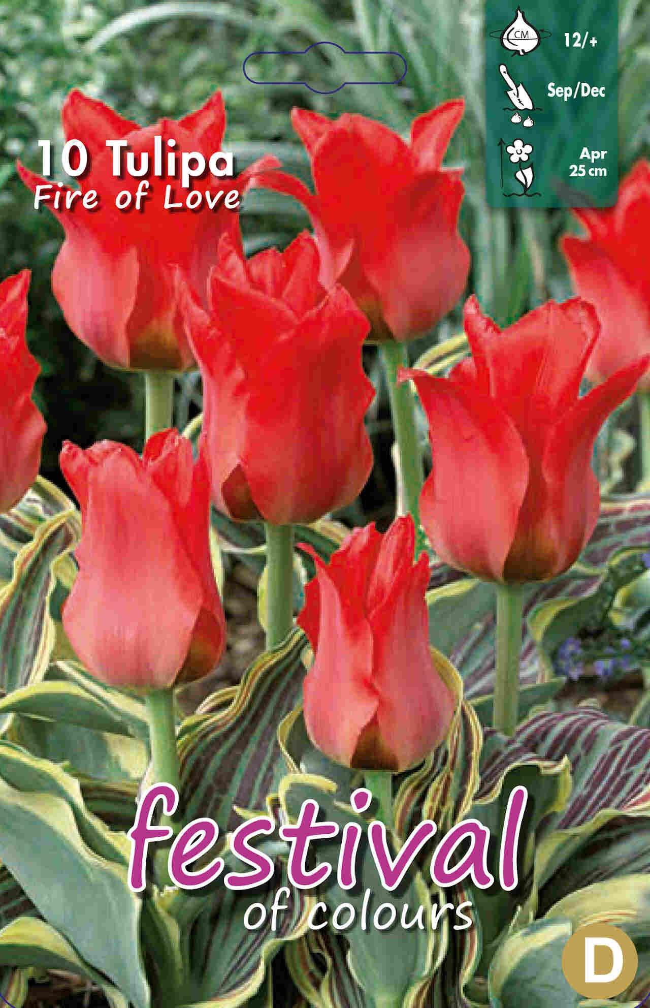 Tulipanløg - Tulipa Fire of Love 12/+