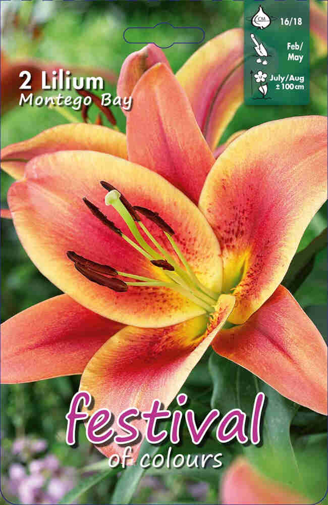 Lilje - Lilium Montego Bay OT Group (x2) 16/18