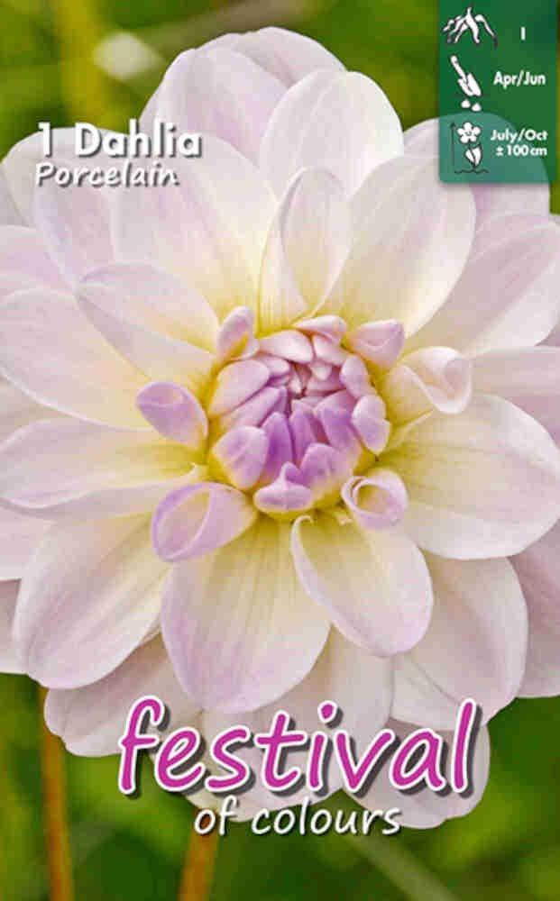 Dahlia Porcelain Decorative