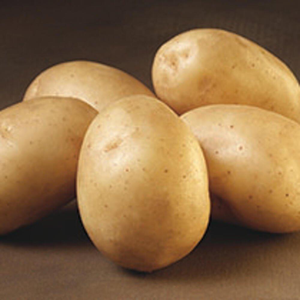 Tidlige solist læggekartofler