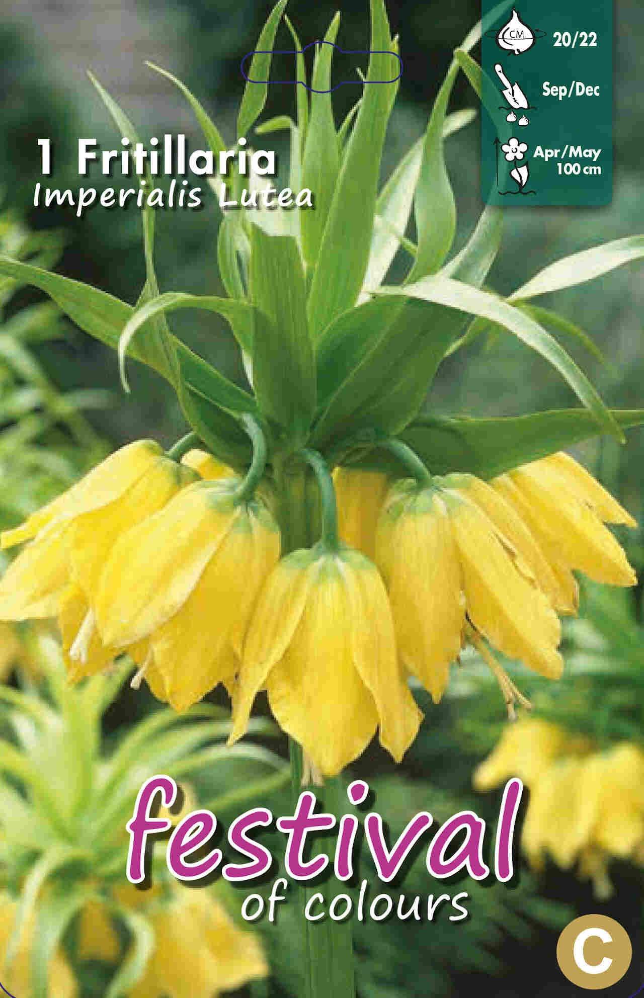 Kejserkrone - Fritillaria Lutea 20/22