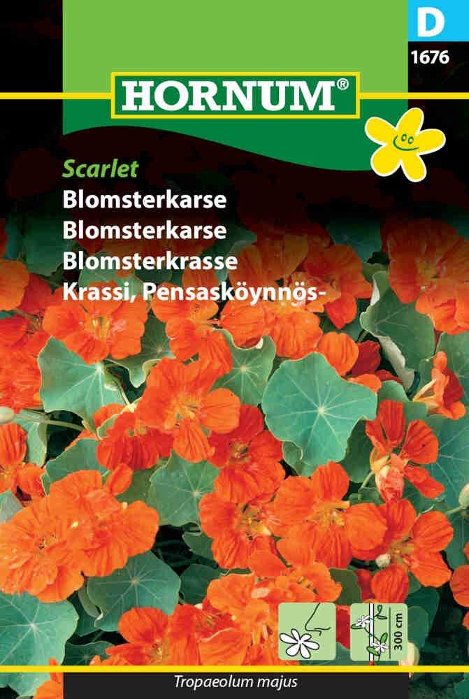 Blomsterkarse frø - Scarlet