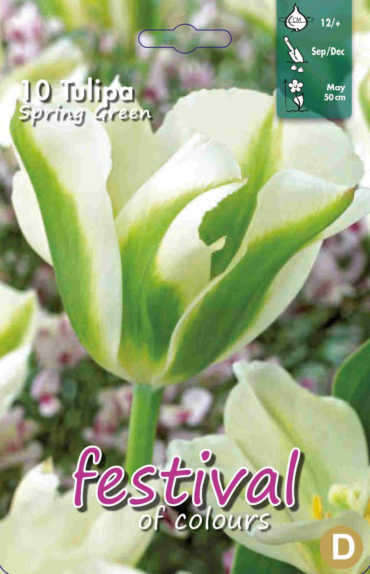 Tulipanløg - Tulipa Spring Green 12/+