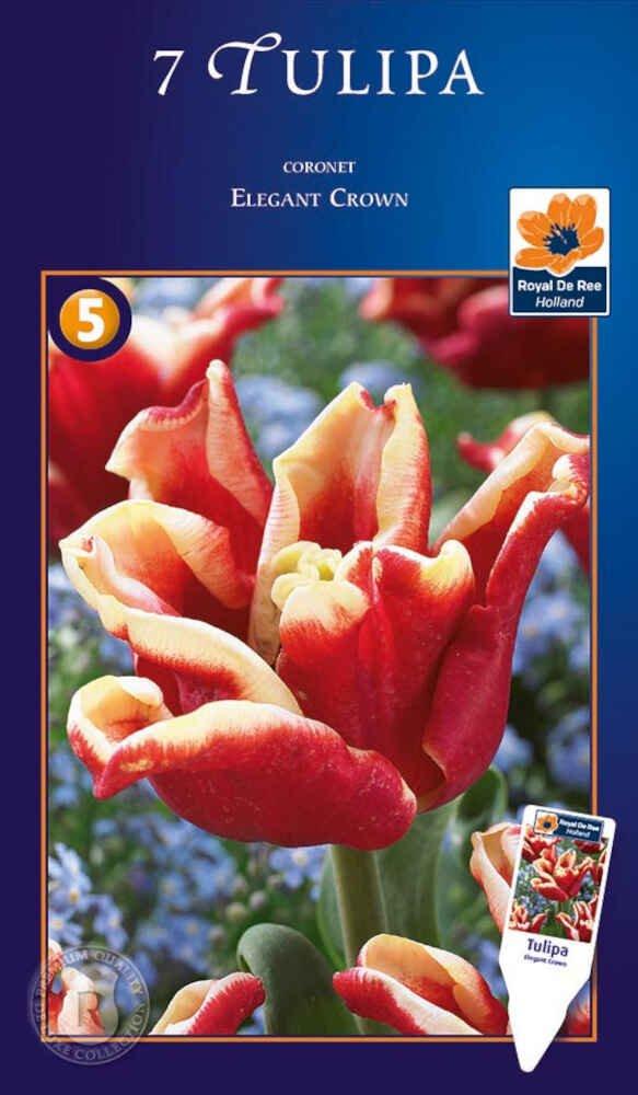 Tulipanløg - Tulipa Elegant Crown 12/+