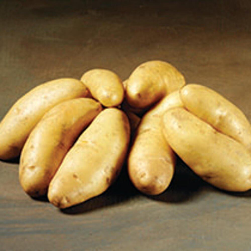 Smukke Asparges læggekartofler