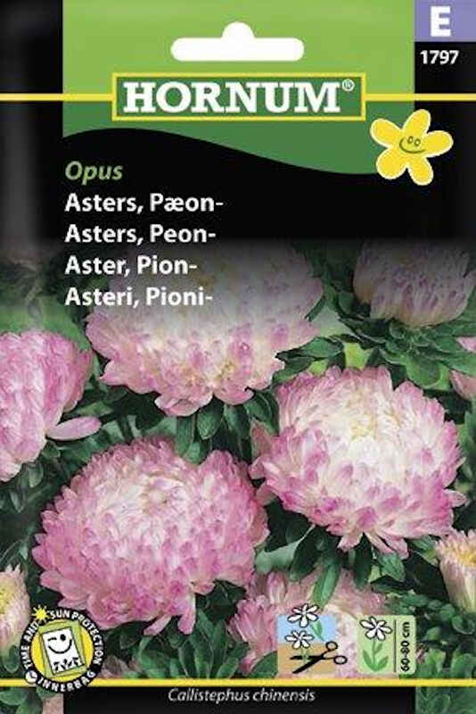 Asters frø - Pæon - Opus