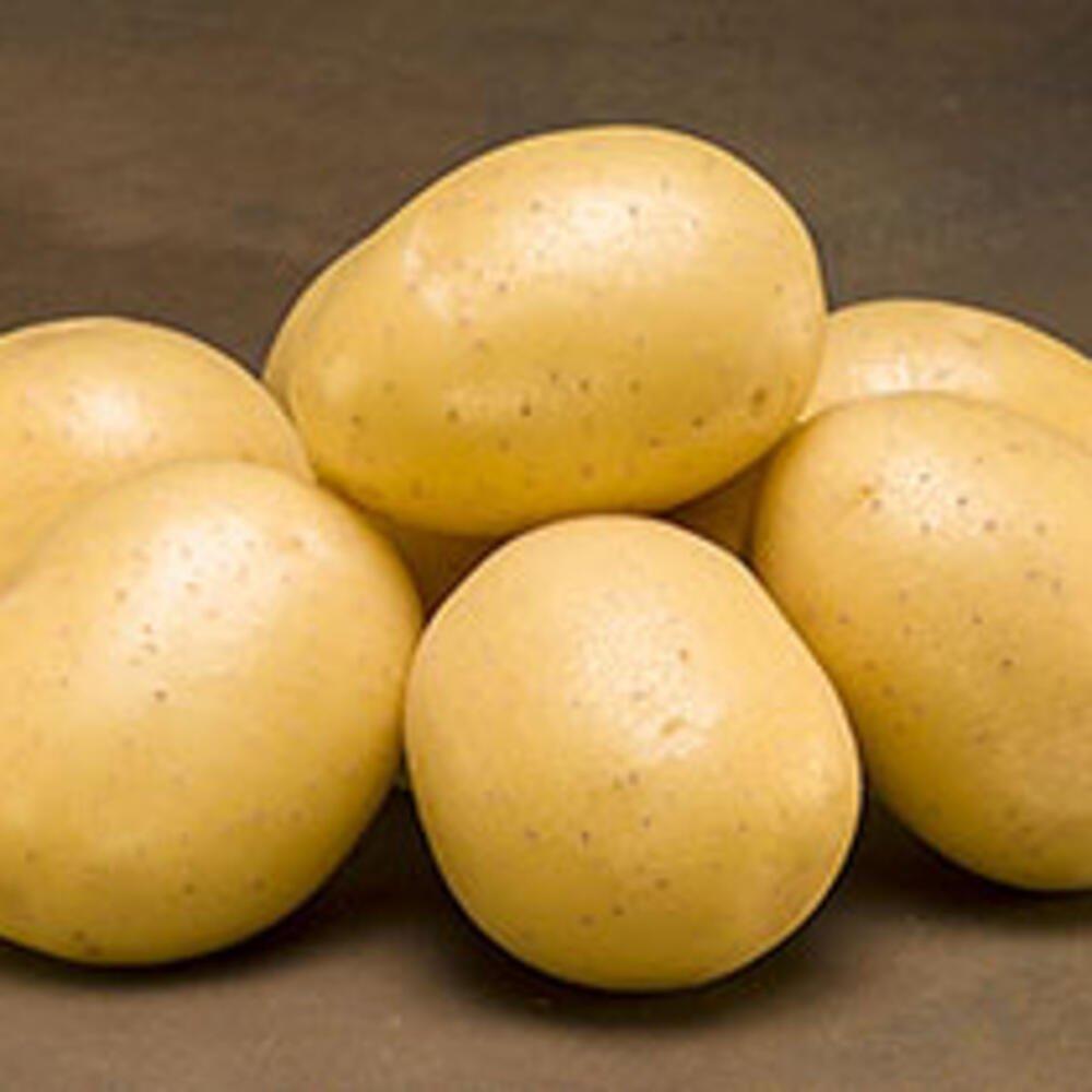 Læggekartofler - Maya