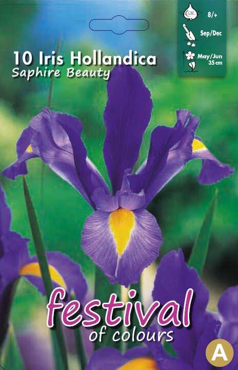 Iris Sapphire Beauty 8/+